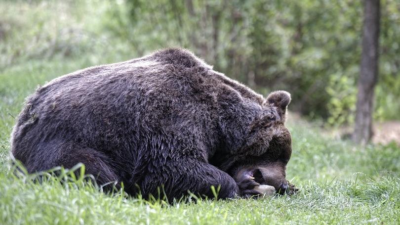 Čo robiť, keď počas behu stretnete medveďa?